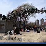 Lincoln Park Zoo: programa para toda família!